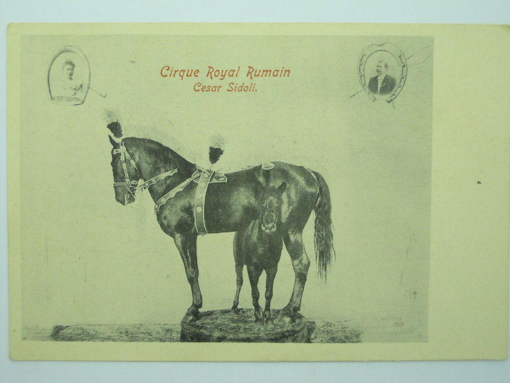 Circus-Horses-Royal-Bumain-Cesar-Sidoli-O8F-S16794